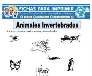 Ficha de Animales Invertebrados para Primaria