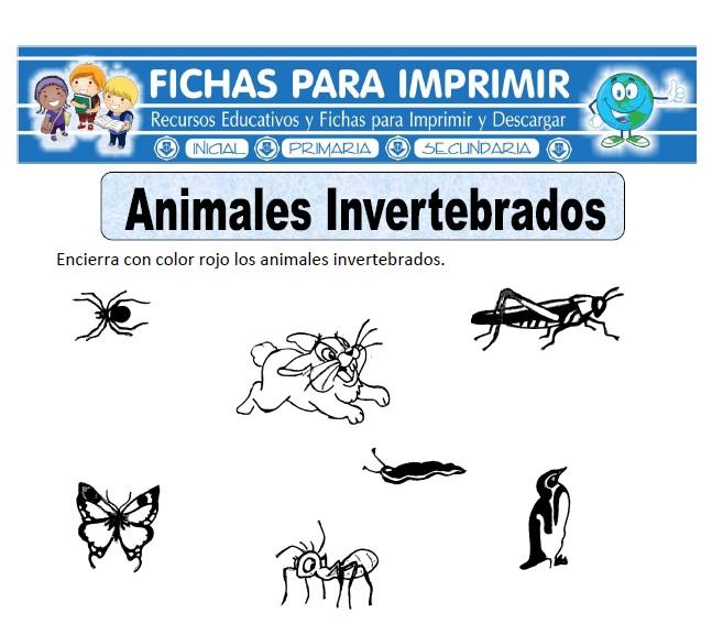 animales invertebrados para primaria