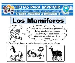 Ficha de Los Animales Mamíferos para Primaria