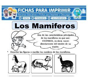 animales mamíferos para primaria