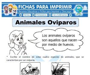 Ficha de Animales Ovíparos para Primaria