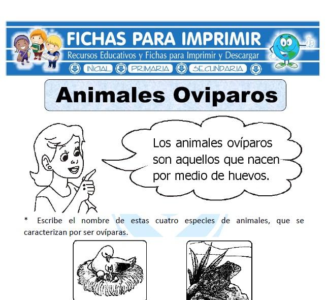 animales ovíparos para primaria