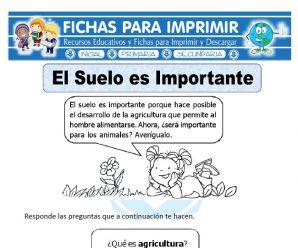 Ficha de Importancia del Suelo para Primaria