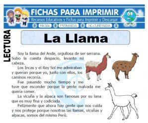 Ficha de La Llama para Primaria