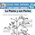 Ficha de la Planta y sus Partes para Primaria
