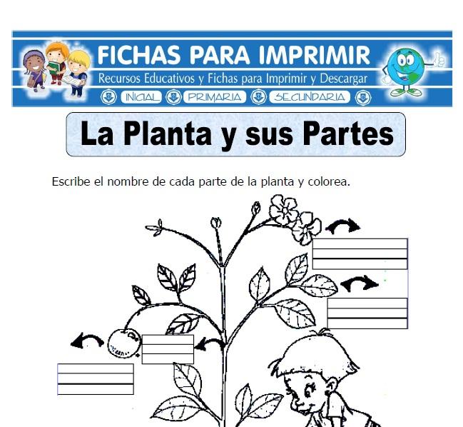 Ficha De La Planta Y Sus Partes Para Primaria Fichas Para