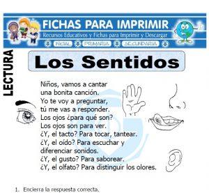 los sentidos para primaria