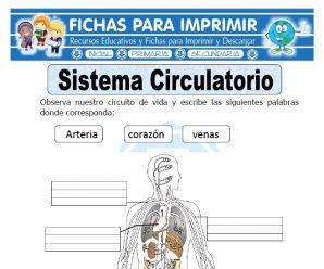 Ficha de Sistema Circulatorio para Primaria