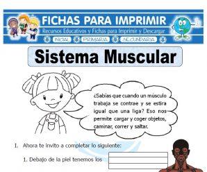 Ficha de Sistema Muscular para Primaria