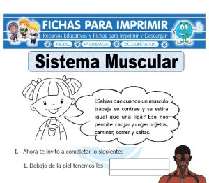 sistema muscular para primaria