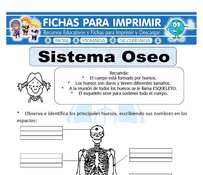 sistema oseo para primaria