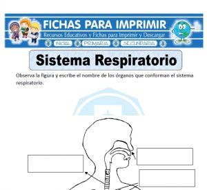 sistema respiratorio para primaria