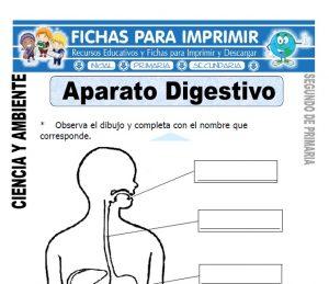 Ficha aparato digestivo Segundo de Primaria