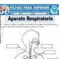 Aparato Respiratorio para Segundo de Primaria
