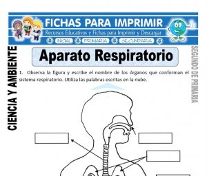 Ficha aparato respiratorio Segundo de Primaria