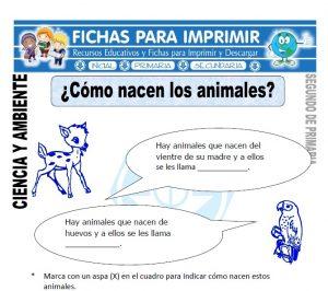 Ficha como nacen los animales Segundo de Primaria