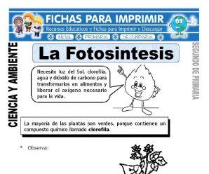 La Fotosíntesis para Segundo de Primaria