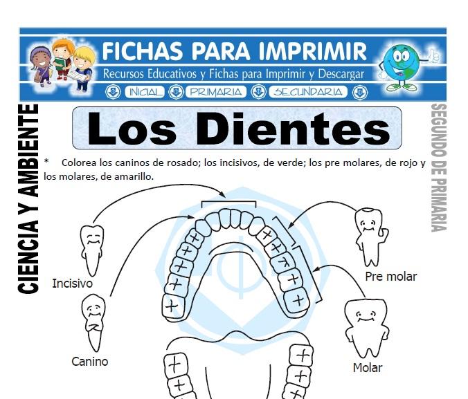 Ficha los dientes Segundo de Primaria