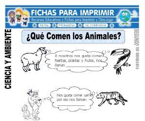 Que Comen los Animales para Segundo de Primaria