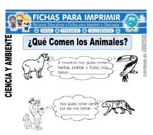 Ficha que comen los animales Segundo de Primaria