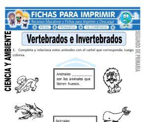 Vertebrados e Invertebrados Segundo de Primaria