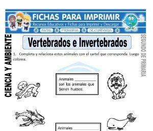 Ficha vertebrados e invertebrados Segundo de Primaria