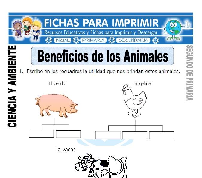 Fichas beneficios de los animales Segundo de Primaria