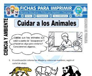 Cuidar a los Animales para Segundo de Primaria