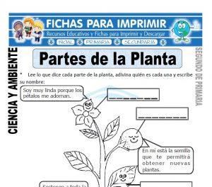 Fichas partes de la planta Segundo de Primaria