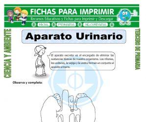 Aparato Urinario para Tercero de Primaria