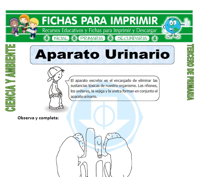 ficha de Aparato Urinario para Tercero de Primaria