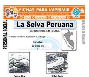 ficha de la selva peruana segundo de primaria
