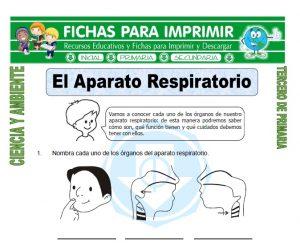 ficha de El Aparato Respiratorio para Tercero de Primaria