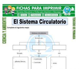 ficha de El Sistema Circulatorio para Tercero de Primaria