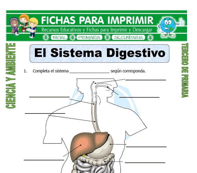 El Sistema Digestivo para Tercero de Primaria - Fichas para Imprimir