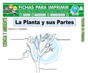 La Planta y sus Partes para Tercero de Primaria