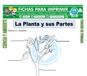 ficha de La Planta y sus Partes para Tercero de Primaria