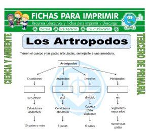 ficha de Los Artropodos para Tercero de Primaria