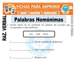 Palabras Homonimas para Segundo de Primaria