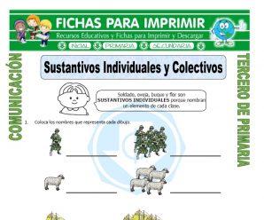 Sustantivos Individuales y Colectivos para Tercero de Primaria