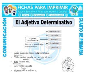 Adjetivos Determinativospara Cuarto de Primaria