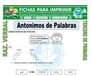 ficha de Antonimos de Palabras para Tercero de Primaria
