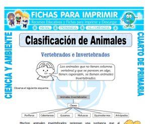 Clasificación de Animalespara Cuarto de Primaria
