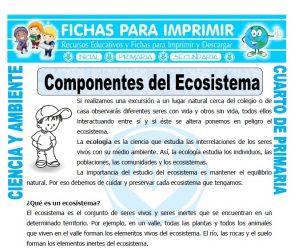 Componentes del Ecosistemapara Cuarto de Primaria