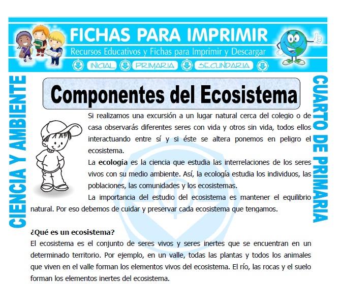 ficha de Componentes del Ecosistema para Cuarto de Primaria