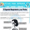 El Aparato Respiratorio y sus Partespara Cuarto de Primaria