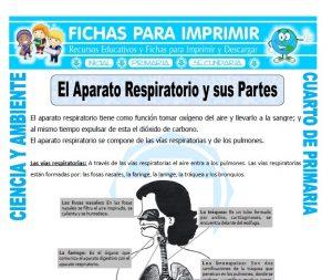 ficha de El Aparato Respiratorio y sus Partes para Cuarto de Primaria