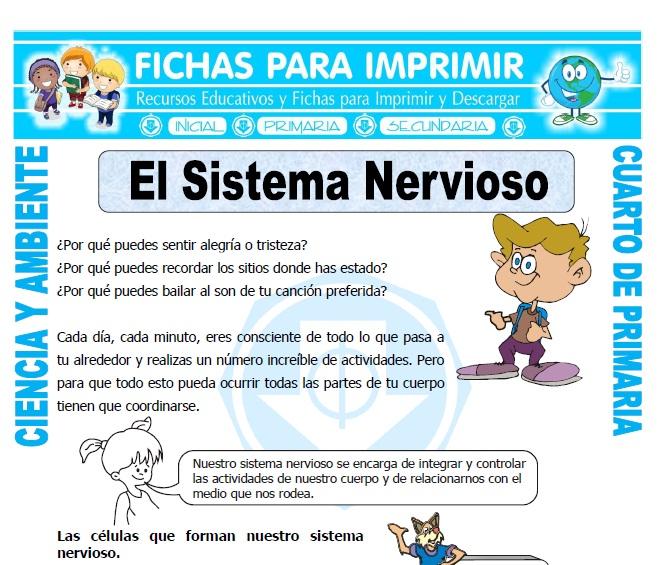 El Sistema Nervioso para Cuarto de Primaria - Fichas para Imprimir