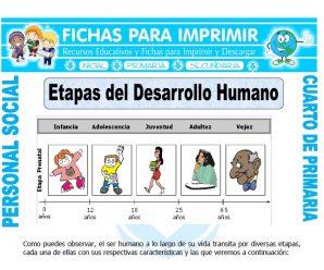 Etapas del Desarrollo Humanopara Cuarto de Primaria