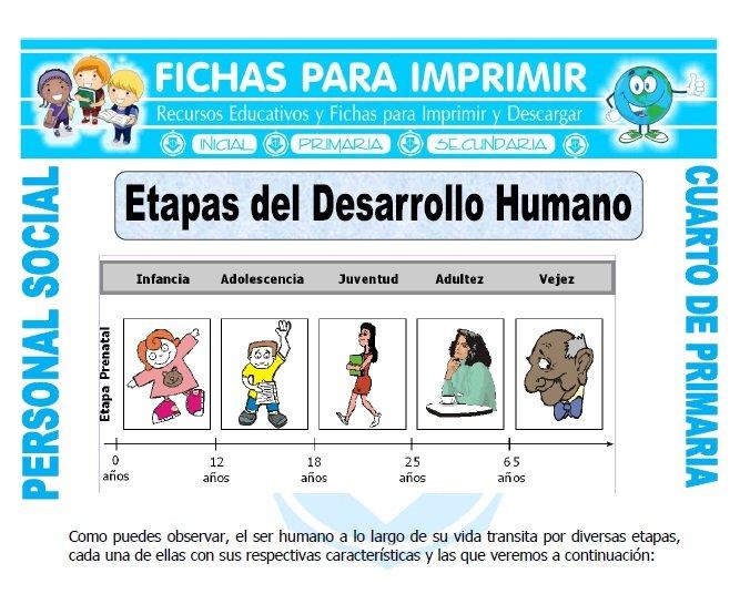 Etapas Del Desarrollo Humano Para Cuarto De Primaria Ficha